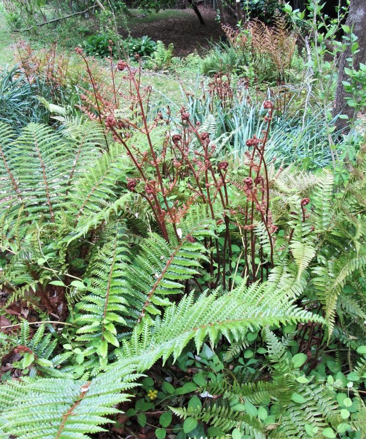 April 21, 2020 The fern garden