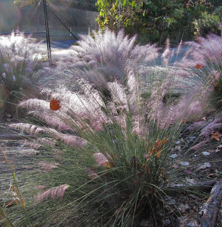 November 6, 2020 Grasses at sunrise